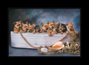 9 terrier pups in a boat professional pet photography small dogs small animals