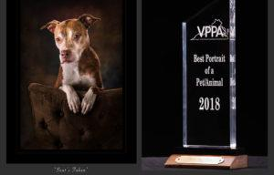 virginia PPA award winning portrait and award for best portrait of an animal in 2018